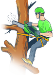 Tree Trimming - Asheville Tree Care